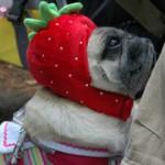 とってもかわいいイチゴ姿で♪こちらはみみちゃんかな?!