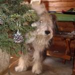 お出迎えは看板犬のインディさん。「メリークリスマ~ス。」