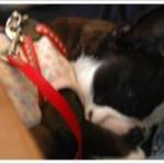 実はカフェではこんなふうに丸まってママのひざの上で寝ていたのです~~ラブリー♪