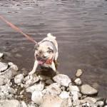番外編その1.多摩川で少しだけ水遊び。