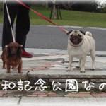 昭和記念公園なの。