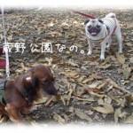 武蔵野公園なの。