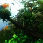 すみだ水族館の熱帯魚