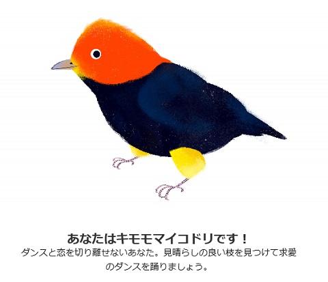 kimomomaikodori1