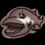 メガマウスザメ