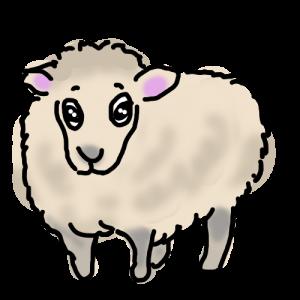 毛刈り前の羊